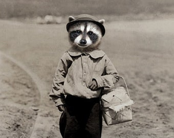 Zori, Vintage Raccoon Print, Anthropomorphic, Altered Photo, Wildlife Art, Funny Anima, Photo Collage Art, Whimsical, Raccoon on Beach