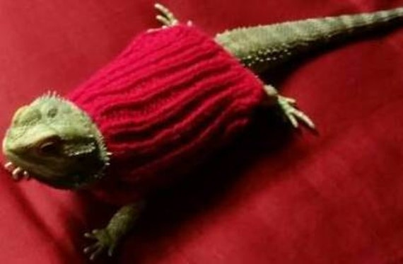 Knitting Pattern For Bearded Dragon : Bearded Dragon Sweaters Hamster Clothes Hamster by PetsParade