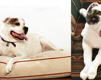 turn your dog into a stuffed animal, Stuffed Animal of Your Pet, Stuffed animal replica of your pet, Stuffed Dog from Picture, Stuffed Pets,