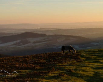 Horse Photograph, Welsh, Wildlife Photography, horse, Landscape photography, Mountains, Mountain photography, Wall art