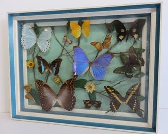 Framed Collection Of Butterflies Along With Some Ladybugs.