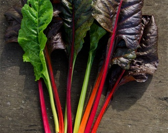 chard or mangold heirloom seeds