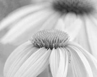 Gray Floral Art, Black and White Flower Photograph, Soft and Dreamy Art, Flower Photography, Modern Floral Art, Coneflower Photograph