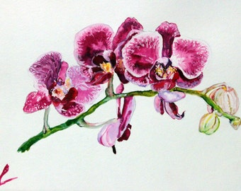 how to draw a realistic orchid step by step