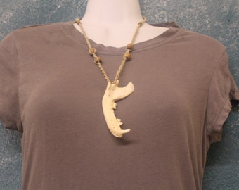 Raccoon Jawbone Necklace