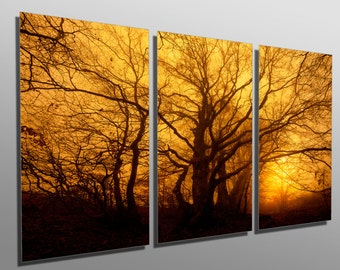 Metal Prints   Trees In The Mist At Dawn   3 Panel Split, Triptych
