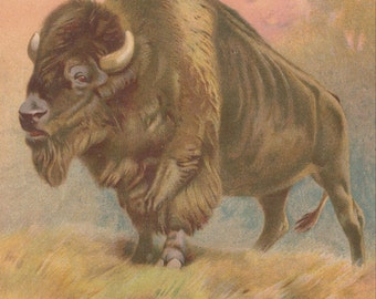 American Buffalo Bison Wildlife Natural History Western Art Antique Chromolithograph Art Print 1892