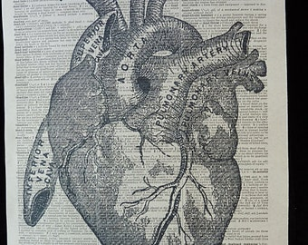 Heart Print No.260, heart poster, anatomy art, human heart, medical poster, medical gift, the heart, medical school, anatomical heart