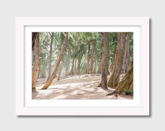 Framed wall pictures of woodland scenes