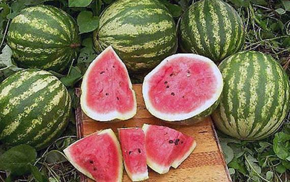 Watermelon Seeds - CRIMSON SWEET - Sweet Melon - GMO Free - Vegetable -10 Seeds