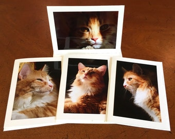 Cat Greeting Photo Cards - Set of 4 - Cats, Orange Cats, Orange Tabby, Pets
