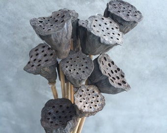 "Natural Mini Lotus Pods - 15"" Tall"