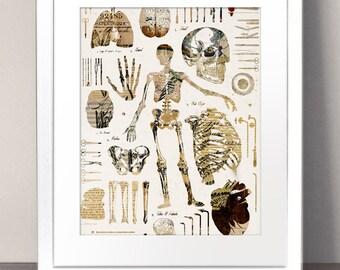 VINTAGE ILLUSTRATION Paper Art Print Picture Skeleton Anatomical Medical Diagram Drawings Doctor Antique Hospital Skull Human