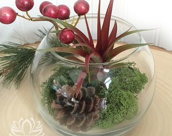 Tillandsia Holiday Terraium Bowl by Zentilly©