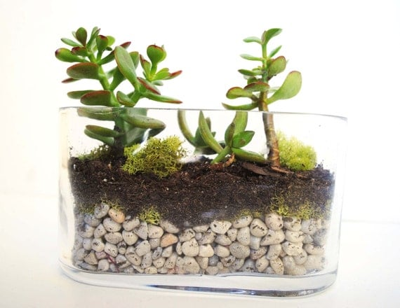 items similar to diy terrarium kit succulent kit miniature garden glass terarium geometric. Black Bedroom Furniture Sets. Home Design Ideas