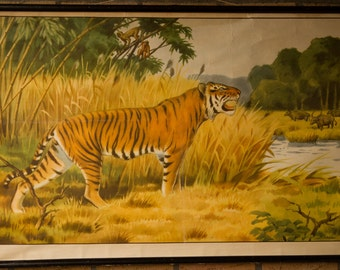 Vintage  Pull Down Chart  Tiger  School Chart