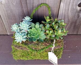 Moss purse succulent arrangement