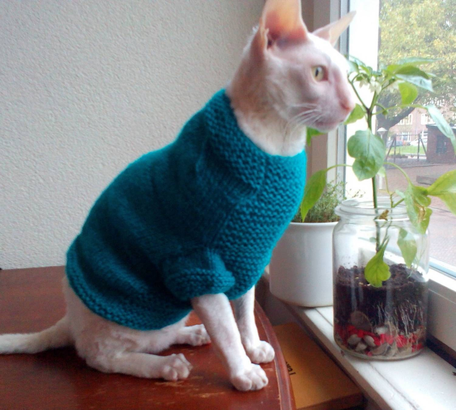 Blue cat sweater Sphynx clothes hand made blue sweater for cat