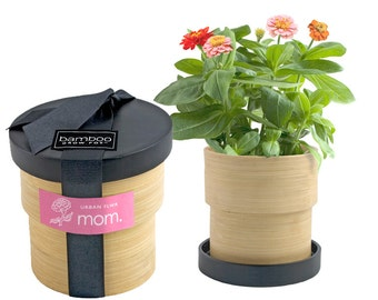 Mason Jar Herb Kit Self Watering Planter For Growing Mint From Modernsprout On Etsy Studio