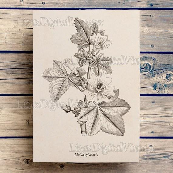 Digital art print, Mallow, Art print download, Vintage flower print, Antique floral print, Botanical poster, Home wall decor, Prints JPG PNG