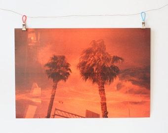 palm tree x cool breeze fire