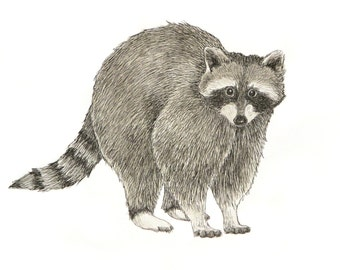 Raccoon Illustration - Ink and Watercolor