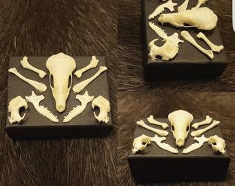 Small mole skull and bones box