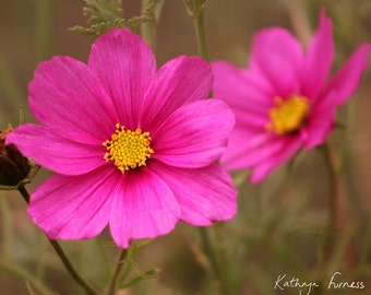 "PINK FLOWERS (10""x8"" in a 12""x10"" mount) fine art photography"
