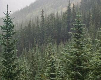 Coniferous - Fir - Fir Photo - Fir Forest - Forest - Forest Landscape - Digital Photo - Digital Download - Instant Download - Wall Decor