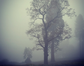 Misty Morning - Digital download photograph
