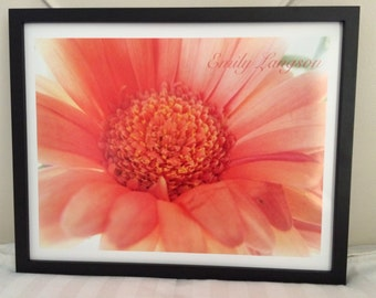 Flower photography - Pink daisy - flower - photography
