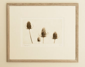 Original etching: 'Teasels', hand-printed from a solar plate.