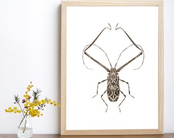 Insect print, insect decor, insect poster, insect printable, nature art, nature print, insect illustration, bug print, bug download
