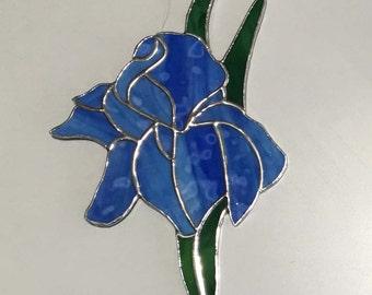 Blue Iris #1