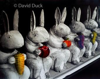 Row of Bunnies