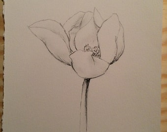 Magnolia Bloom - pencil - mid bloom