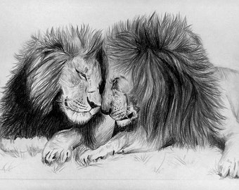 A4 framed two lions original drawing