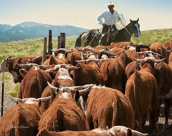 New Grass   *  Western Art  Cowboy Ranch Hereford Cattle
