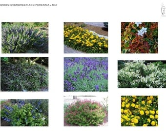 Colorful Southern Blooming Evergreen and Perennial Mix