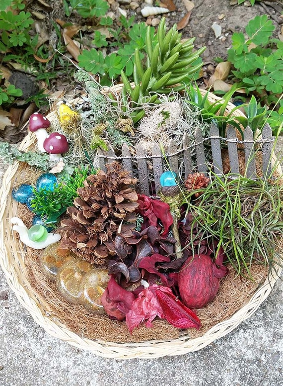 Fairy Garden Kit, Fairy Garden Supplies, Fairy Kits, Fairy House Kit ...