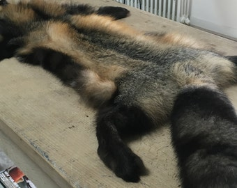 Skins of Fox or coyote, fox or coyote hides