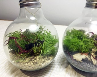 Recycled LIGHT BULB TERRARIUM: real bulb / mini terrarium / hanging planter / reused / upcycled / recycled / plant hanger / unique gift