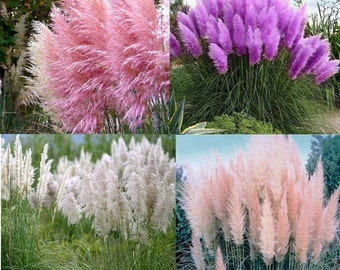 Fast growing etsy for Fast growing ornamental grass