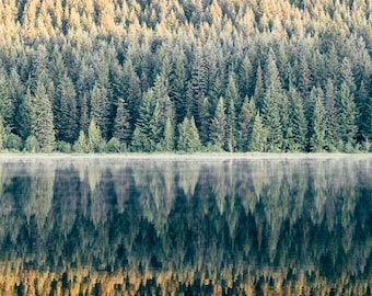 Treeflections at Trillium
