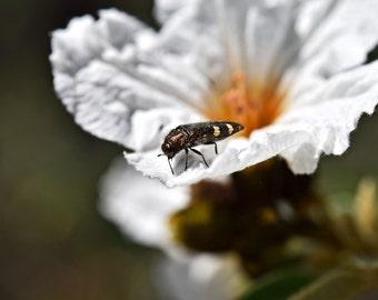 W6 - Gold Bug
