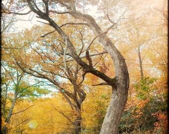 Autumn Tree Print, Fine Art Photography, Fall Colors