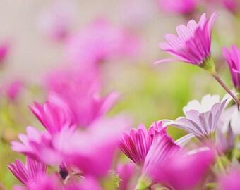 large wall art - wall art - flower photography print floral art pink floral photography art print flower photography nature photography
