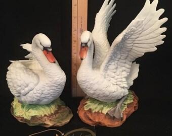 mute swan set
