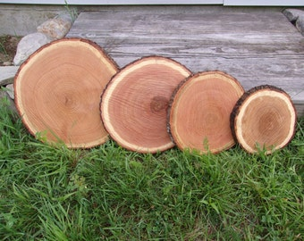 "15 Pc 11"" to 12"" Oak Log Slices Wood Disk Rustic Wedding Centerpiece Coaster"