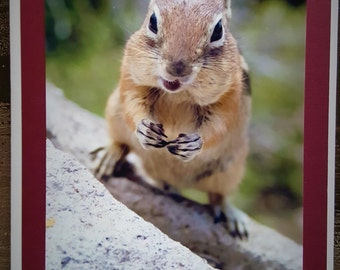 Photo, What's Up, Squirrel, Thinking of You, Thank You, Miss You Greeting Card
